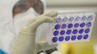 L'ingénieur-virologue français Thomas Mollet examine 24 cellules monocouches adhérentes de plaques de puits infectées parle coronavirus au laboratoire P23 du siège du groupe Valneva SE à Saint-Herblain, le 30 juillet 2020 (illustration). (JEAN-FRANCOIS MONIER / AFP)