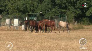 Des chevaux en Saône-et-Loire. (France 2)