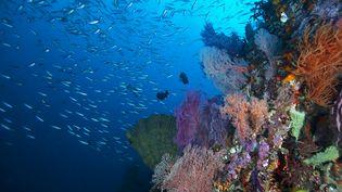 Des poissons et des coraux dans l'océan Pacifique. (CDASCHER / E+)