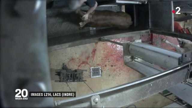 Indre : l'abattoir du Boischaut fermé d'urgence après une vidéo-choc de L214