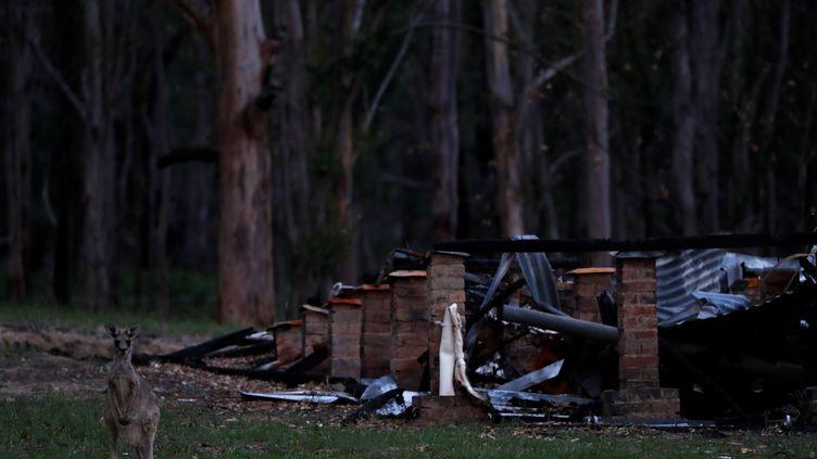 Un kangourou se tient devant les restes d'une maison détruite par le feu àWytaliba (Nouvelle-Galles du Sud), en Australie, le 29 janvier 2020. (JORGE SILVA / REUTERS)