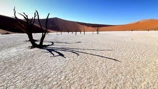 En Namibie, les arbres morts de Dead Vlei. (MATTHIAS TOEDT / DPA-ZENTRALBILD / DPA PICTURE-ALLIANCE)