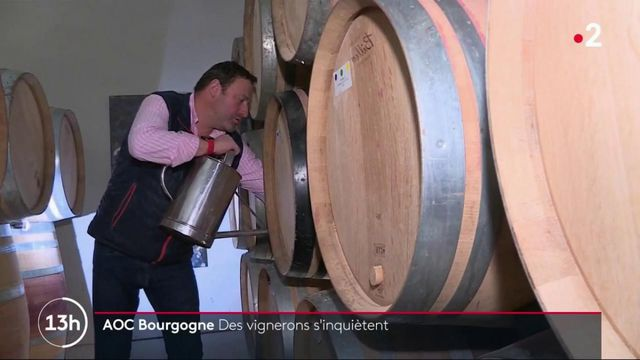 Bourgogne : des vignerons pourraient perdre l'appellation d'origine contrôlée