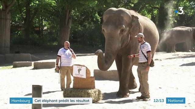 Allemagne : une femelle éléphant prédit l'issue des matchs de l'Euro