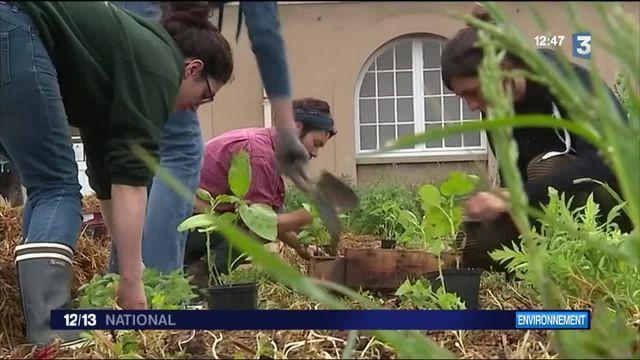 Environnement : à la rencontre d'étudiants paysagistes
