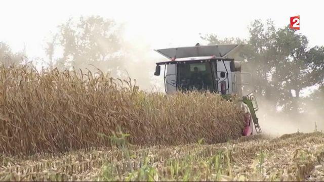 Pesticides : des scientifiques à la solde de Monsanto ?