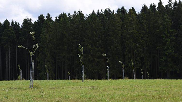 De jeunes arbres sont plantés à proximité d'une fôret. (MAXPPP)