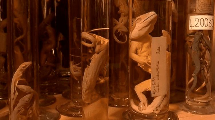 La salle des liquides, peuplée de monstres, des réserves du musée des Confluences.  (Culturebox / Capture d'écran)