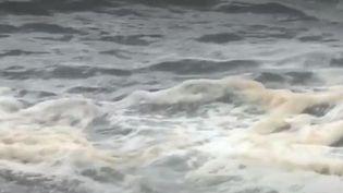 Les ONG dénoncent la pollution aux détergents qui minent le Golfe de Gascogne. Des résidus de lessive ravageraient le littoral. (FRANCE 2)