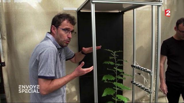 Envoyé spécial : à la découverte de la sensibilité des plantes