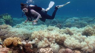 Un plongeur examine l'état des coraux blanchis près de l'île Orpheus (Australie), le 10 avril 2017. (ED ROBERTS / ARC CENTER OF EXCELLENCE FOR CORAL REEF STUDIES / AFP)
