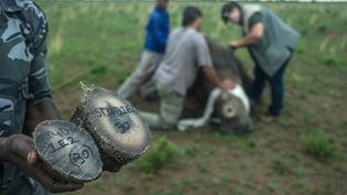 Les cornes de rhinocéros sont vendues pour leurs prétendues vertus médicinales. (MUJAHID SAFODIEN / AFP)