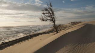 Un Tamaris frappé par le vent sur une dune de Camargue, le 21 janvier 2014. (JEAN-EMMANUEL ROCH? / BIOSPHOTO)