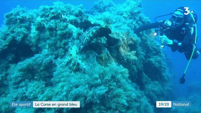 Tourisme : plongée dans les profondeurs du sud de la Corse