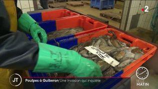 Des poulpes. (France 2)