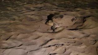 Fréjus: une tortue marine pond sur la plage (CAPTURE D'ÉCRAN FRANCE 3)