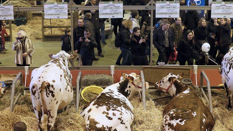 Les visiteurs du Salon de l'agriculture photographient des vaches, le 21 février 2015 à Paris. (PATRICK KOVARIK / AFP)