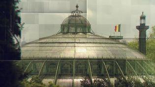 Belgique : les serres royales de Bruxelles ont rouvert au public (FRANCE 3)