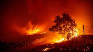 """Le """"Kincade Fire"""" ravage des vignes près de Geyserville, en Californie (Etats-Unis), le 24 octobre 2019. (JOSH EDELSON / AFP)"""