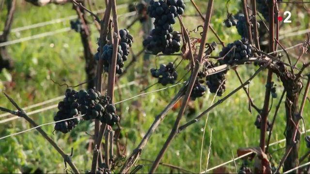 Taxes Trump : les viticulteurs craignent 600 millions d'euros de perte