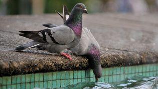"""Une étude affirme que le """"système de navigation"""" de l'oiseau à la grise robe ne peut pas être situé dans son bec. (LUIS ROBAYO / AFP)"""