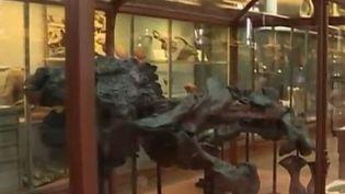 paleontologie (FRANCE 3)
