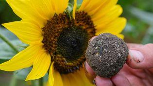 Ces bombes à graines lancées en ville permettent de végétaliser des zones abandonnées. (PATRICK PLEUL / DPA-ZENTRALBILD)