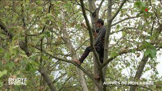 Envoyé spécial. Auprès de mon arbre (ENVOYÉ SPÉCIAL  / FRANCE 2)