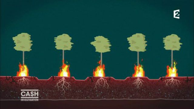 """VIDEO. """"Cash Investigation"""". Bois : les plantations du géant indonésien du papier sont des poudrières à ciel ouvert..."""