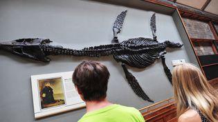 Une salle du Muséum d'Histoire Naturelle de Londres  (ANTOINE LORGNIER / ONLY WORLD / ONLY FRANCE)