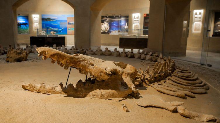 """La région deFayoum, au sud du Caire,abriteégalement la Vallée des baleines, où sont exposés plus d'une centaine de fossiles""""inestimables"""", selon l'Unesco.  (AHMED AL SAYED / ANADOLU AGENCY)"""