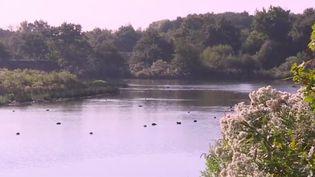 Un ornithologue vous fait visiter la réserve du Teich, ouverte en 1972 dans le bassin d'Arcachon (Gironde). Une multitude d'oiseaux sauvages y vivent. (FRANCE 3)