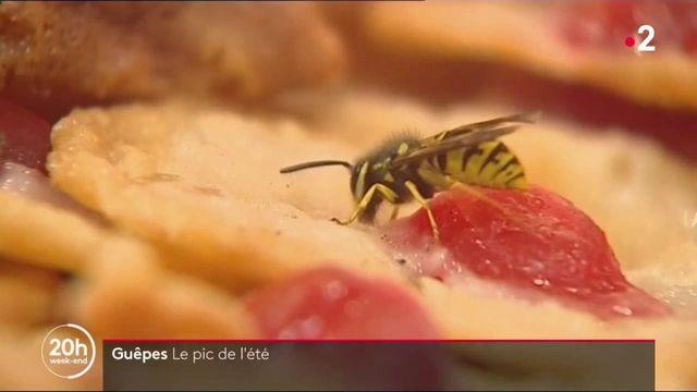 Insectes : pourquoi les guêpes sont partout cet été