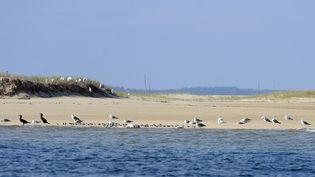 Le banc d'Arguin, en face de la dune du Pilat, en Gironde. (Photo d'illustration) (JEAN-PIERRE MULLER / AFP)