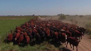 Argentine : la guerre de la viande dans un pays en crise (France 2)