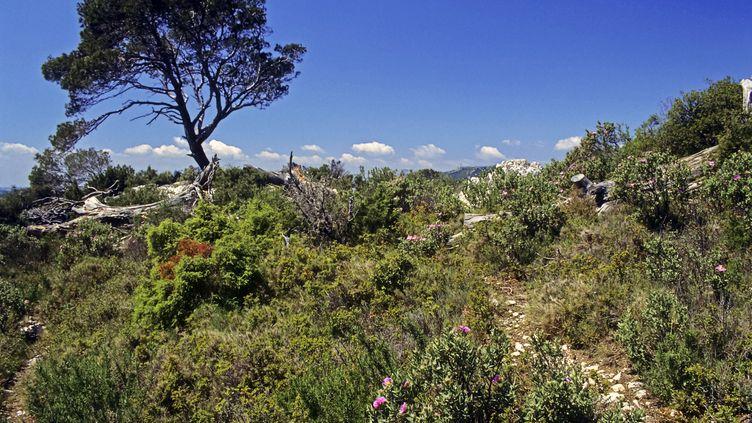 Garrigue en Provence. (ANNIE & JEAN-CLAUDE MALAUSA / BIOSPHOTO)