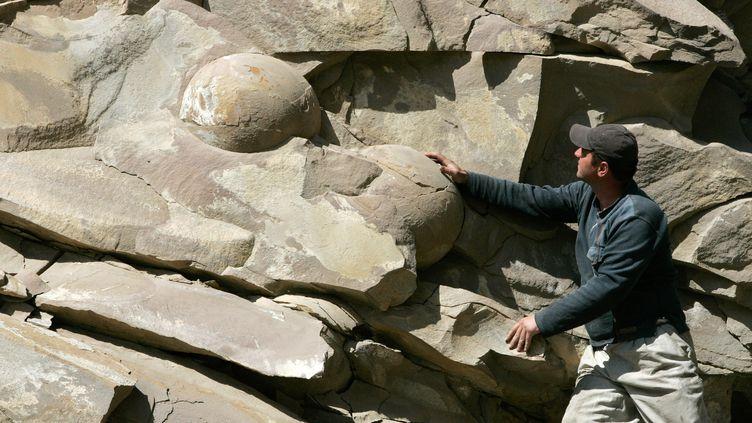 Des fossiles découverts en Tchétchénie en avril 2012 pourraient être des oeufs de dinosaures. (SAID TCARNAEV / RIA NOVOSTI /AFP)