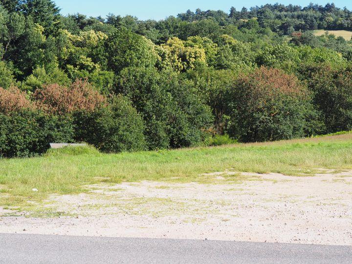 Des arbres rougeâtres, quelques jours après un ball-trap, le 22 juin 2018 à Chambles (Loire). (DR)