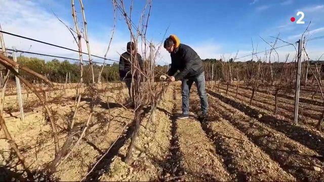 Taxe Trump sur les vins : les vignerons français encore un peu plus pénalisés
