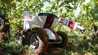 Baptisé VIN pour Viticulture intelligente naturelle, ce robot vigneron a été développé en Bourgogne. (PHILIPPE DESMAZES / AFP)
