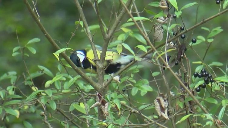 Biodiversité : en Haute-Savoie, un village entier devenu un refuge pour les oiseaux (FRANCE 3)