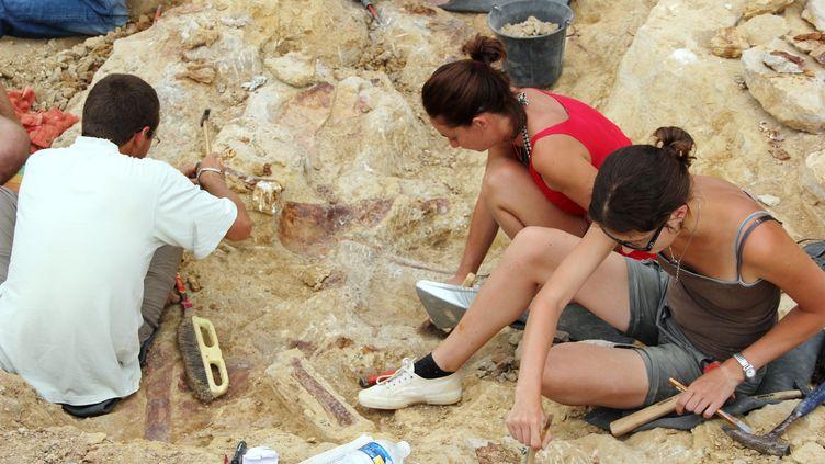 Des paléontologues ont découvert un nouveau type de dinosaure au cours de fouilles dans les collines de la commune de Velaux, près d'Aix-en-Provence (Bouches-du-Rhône), le 23 août 2012. (VILLE DE VELAUX / AFP)