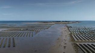 Les festivaliers se rendent sur l'île de Tatihou. (France 2)