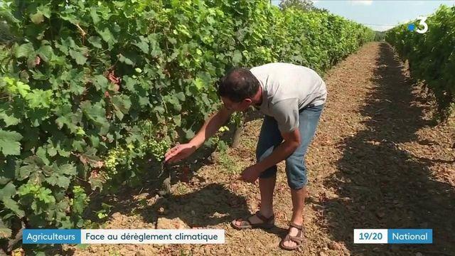 Agriculture : les exploitants pénalisés par le dérèglement climatique