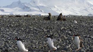 La faune de l'Antarctique, le 6 mars 2016. (EITAN ABRAMOVICH / AFP)