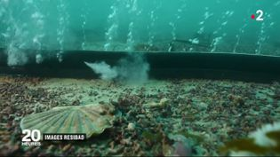Capture d'écran d'un reportage de France 2 sur les rideaux de bulles. (FRANCE 2)
