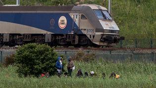 Un train d'Eurotunnel, à Coquelles, près de Calais (Pas-de-Calais), le 29 juillet 2015. (PHILIPPE HUGUEN / AFP)
