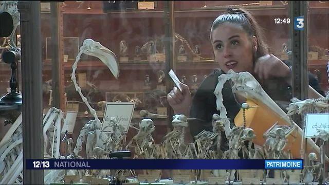Fête de la science : Le Museum d'Histoire Naturelle se dévoile