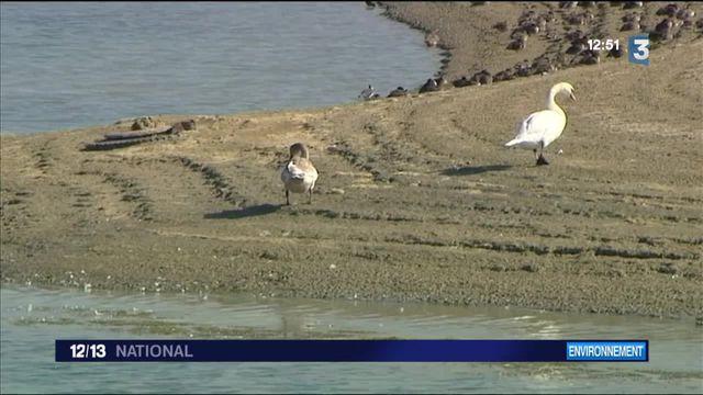 Environnement : la migration des oiseaux, casse-tête des agriculteurs