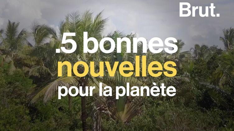 VIDEO. Le grand retour d'une espèce, fin des sacs plastique en Tunisie… 5 bonnes nouvelles pour la planète (BRUT)